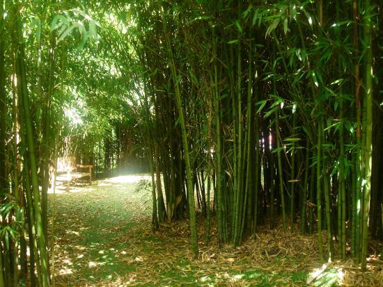 El bamb el jardin insolito for Jardin bambu